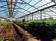 派遣できる農業技術者